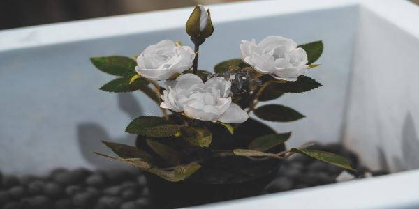 Ideas for Preserving A Loved One's Memory